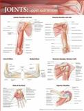 Joints of the Upper Extremities Anatomical Chart, Anatomical Chart Company, 0781786568