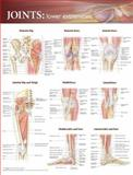 Joints of the Lower Extremities Anatomical Chart, Anatomical Chart Company, 0781786606