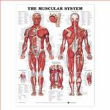The Muscular System Anatomical Chart, Anatomical Chart Company Staff, 158779683X