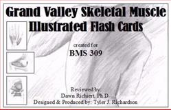 Grand Valley Skeletal Muscle Illustrated Flash Cards : Created for BMS 309, , 098211690X