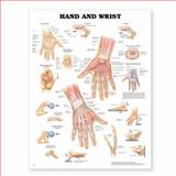 Hand and Wrist Anatomical Chart, Anatomical Chart Company Staff, 1587796945