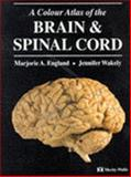 Color Atlas of the Brain and Spinal Cord, '98, England, 0723416966