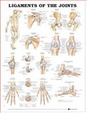 Ligaments of the Joints Anatomical Chart, Anatomical Chart Company Staff, 1587797100