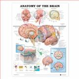 Anatomy of the Brain Anatomical Chart, Anatomical Chart Company Staff, 158779716X