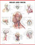 Head and Neck Anatomical Chart, Anatomical Chart Company Staff, 1587797283