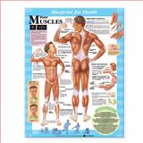 Blueprint for Health Your Muscles Chart, Anatomical Chart Company Staff, 1587797372