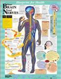 Your Brain and Nerves Blueprint Chart, Anatomical Chart Company Staff, 1587797429