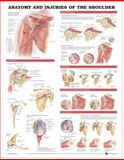 Anatomy and Injuries of the Shoulder Anatomical Chart, Anatomical Chart Company Staff, 1587798077