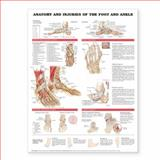 Anatomy and Injuries of the Foot and Ankle, Anatomical Chart Company, 1587798395