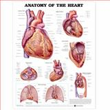 Anatomy of the Heart, Anatomical Chart Company Staff, 1587798433
