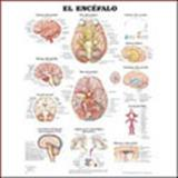 The Brain Chart In Spanish, Anatomical Chart Company Staff, 1587798689