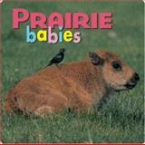 Prairie Babies, Kristen McCurry, 1559718730