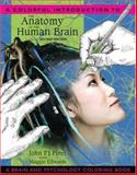 A Colorful Introduction to the Anatomy of the Human Brain, Pinel, John P. J. and Edwards, Maggie, 0205548741