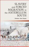 Slavery and Forced Migration in the Antebellum South, Pargas, Damian Alan, 1107658969