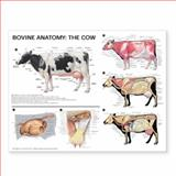 Bovine Anatomy : The Cow Anatomical Chart, Anatomical Chart Company Staff, 1587799022