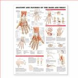 Anatomy and Injuries of the Hand and Wrist Anatomical Chart, Anatomical Chart Company Staff, 1587799146