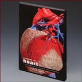 Exploring the Heart : A 3D Overview of Anatomy and Pathology, Anatomical Chart Company Staff, 1904369340