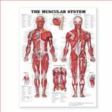 The Muscular System Giant Chart, Anatomical Chart Company Staff, 1587799812
