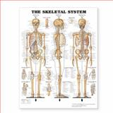 The Skeletal System Giant Chart, Anatomical Chart Company Staff, 1587799820