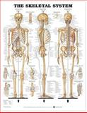 Skeletal 1 Charts 3-Chart Set (Laminated Charts), Lippincott  Williams & Wilkins, 146986987X