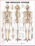 Skeletal 1 Charts 3-Chart Set (Laminated Charts), Lippincott Williams and Wilkins Staff, 146986987X