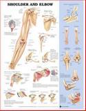 Skeletal 2 Charts 3-Chart Set (Laminated Charts), Lippincott Williams and Wilkins Staff, 1469869888