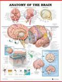 Neurology 3-Chart Set, Lippincott Williams and Wilkins Staff, 1469869934