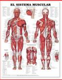 The Muscular System Anatomical Chart in Spanish (el Sistema Muscular), Anatomical Chart Company Staff, 1587799960